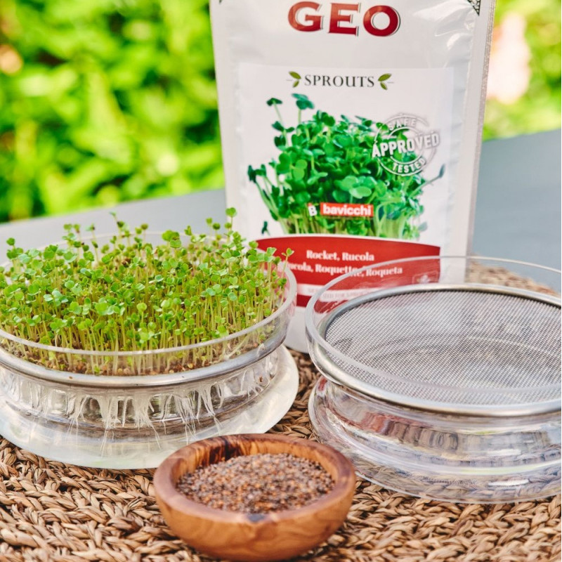 Glass seed sprouter