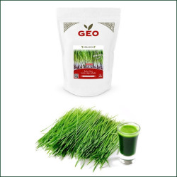 Seed Germination Organic Barley Grass