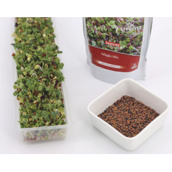 sprouted seeds recipes