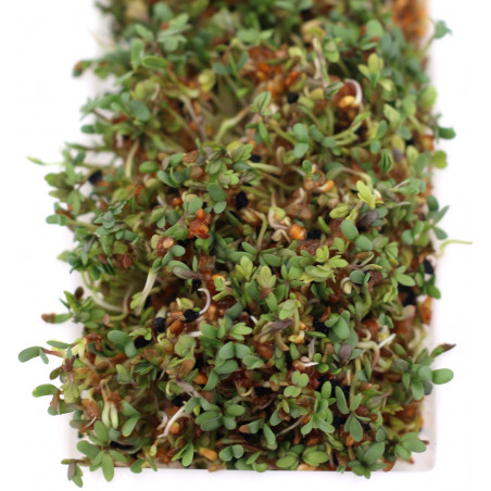 how to make sprouted seeds